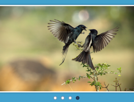 Los mejores plugins responsive gratuitos para Sliders en Wordpress