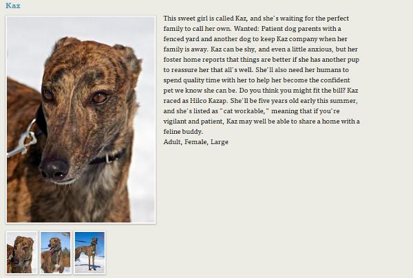 rescate animales domesticos
